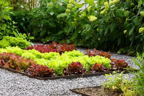 Pflegeleichter Garten mit Brunnen und Kräutergarten im Zürcher Oberland