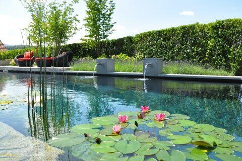 Wassergarten mit Schwimmteich und Seerosen Schweiz