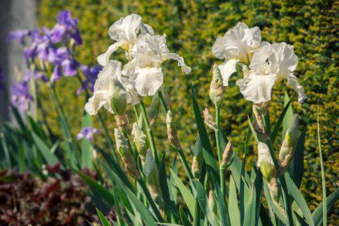 Gartengestaltung-Brunnen-7