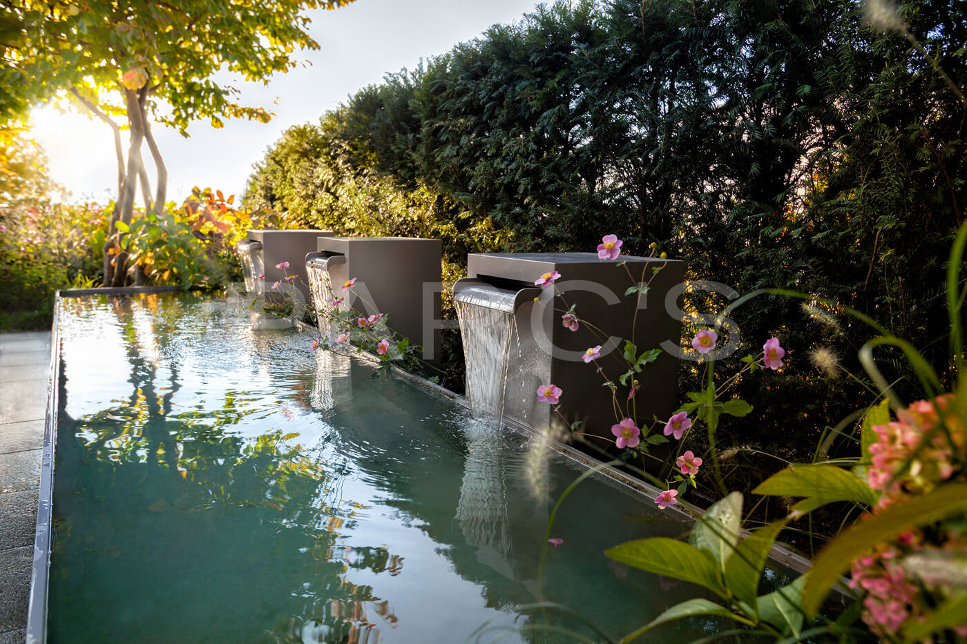 Anemone-hupehensis-Gartengestaltung