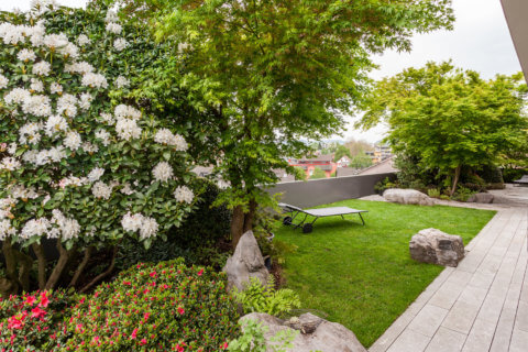 Rhododendron-Strauch