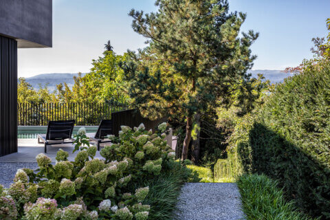 Hydrangea paniculata, Rispenhortensie, Hortensien, Gartengestaltung